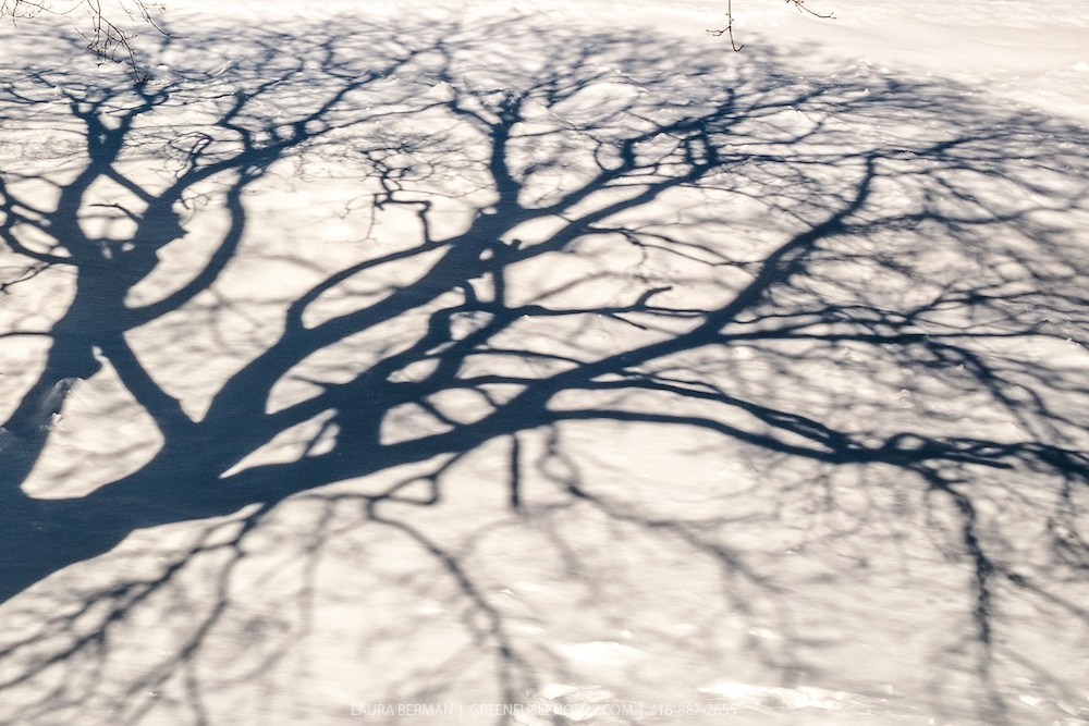 Looming Shadows: Some Thoughts on Avoidance